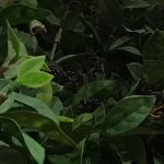 hyebinkim41-사진리뷰